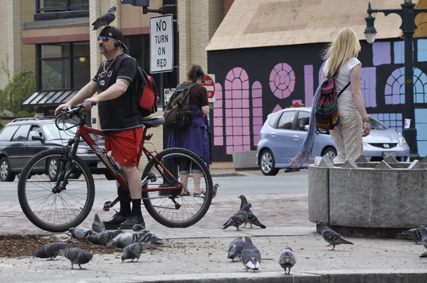 A man coaxes a pigeon on his head at Portland's Congress Square Plaza.